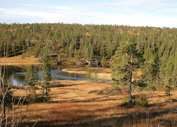 Landscape with tarn stock photo