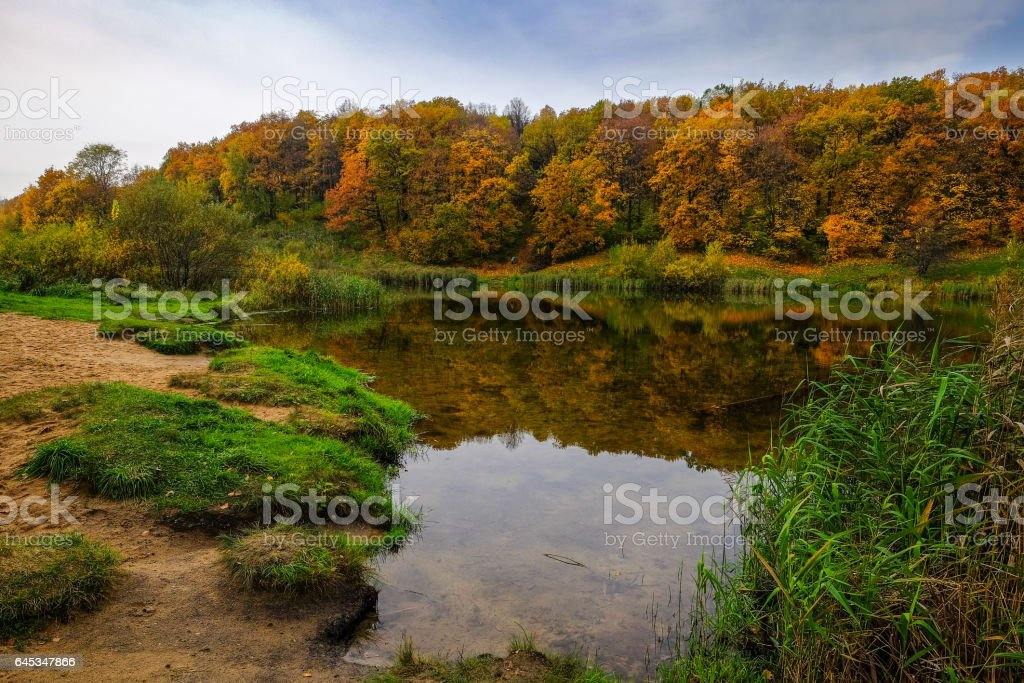 landscape with transparent water of quiet pond and wall of trees with vivid colored leaves stock photo