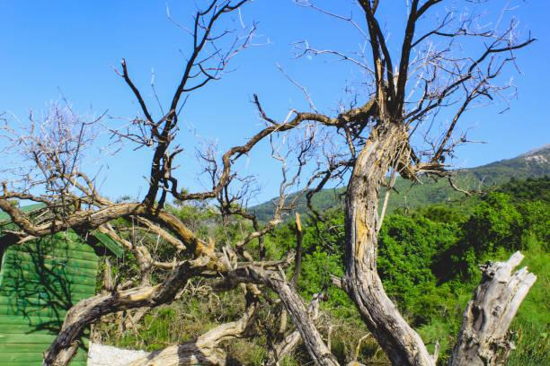 Landschaft mit Baum – Foto