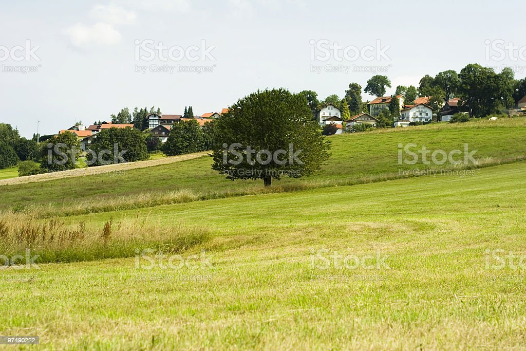 Landscape with tree royalty-free stock photo