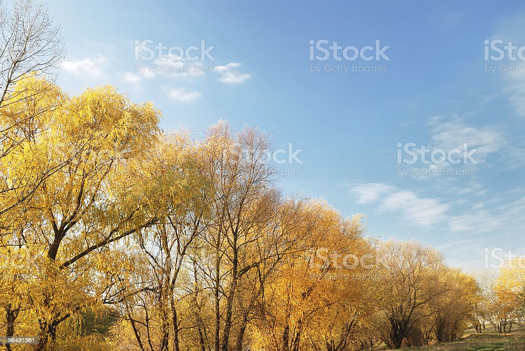 Landscape with trees against the sky royalty-free stock photo