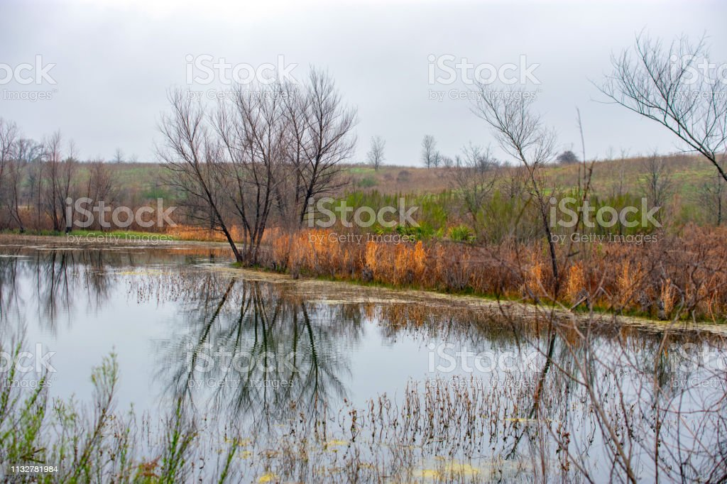 landscape with trees and grasses and water Texas stock photo