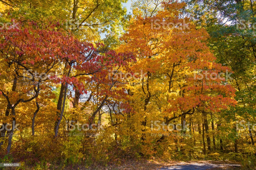 Landscape with Trees in Autumn Colors (Foliage) and Blue Sky, Poets' Walk Park, Red Hook, Hudson Valley, New York. stock photo