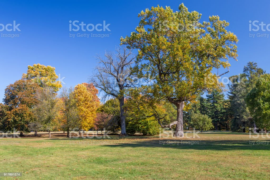 Landscape with Trees in Fall Colors (Foliage) and Vivid Blue Sky, Hyde Park, Hudson Valley, New York. stock photo