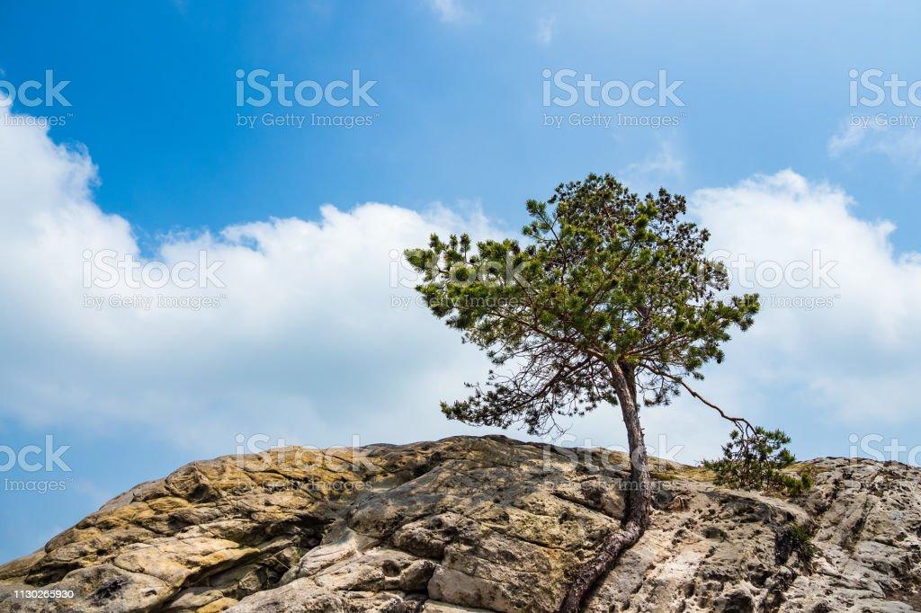 Landschaft mit Bäumen im Bereich Harz, Deutschland – Foto