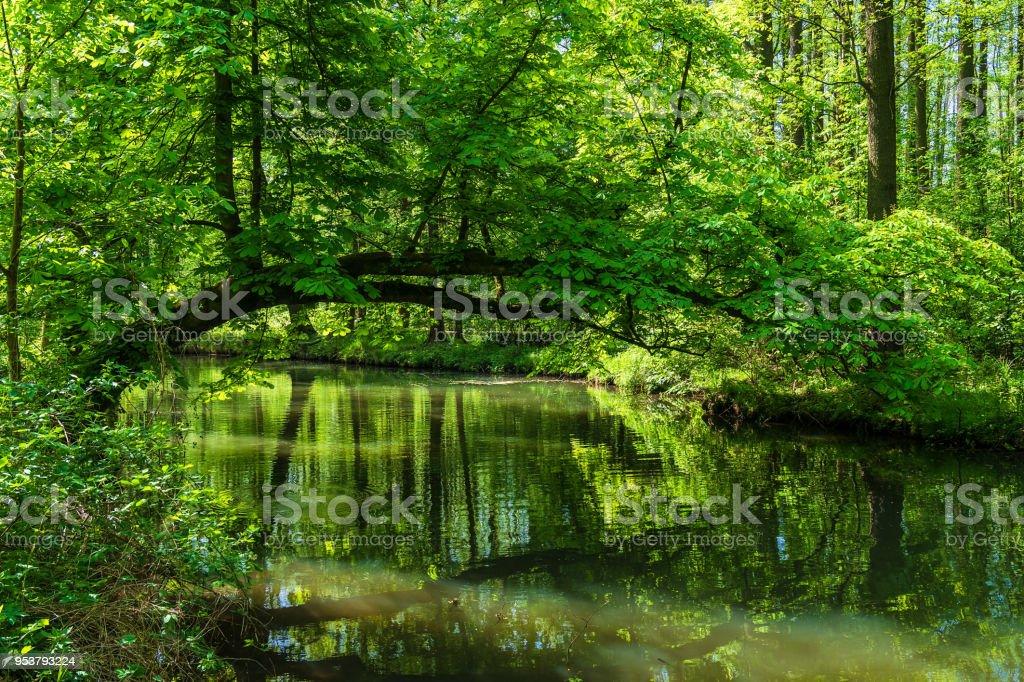 Landschaft mit Bäumen im Bereich Spreewald, Deutschland – Foto