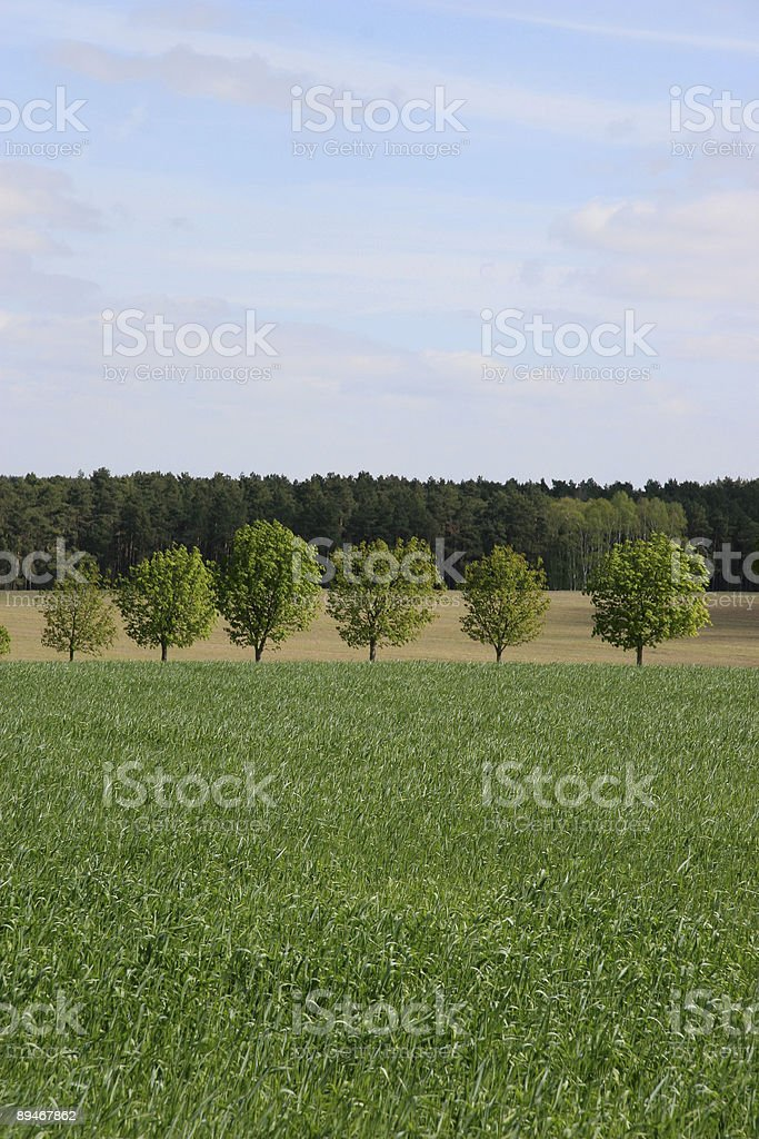 Landscape with trees 免版稅 stock photo