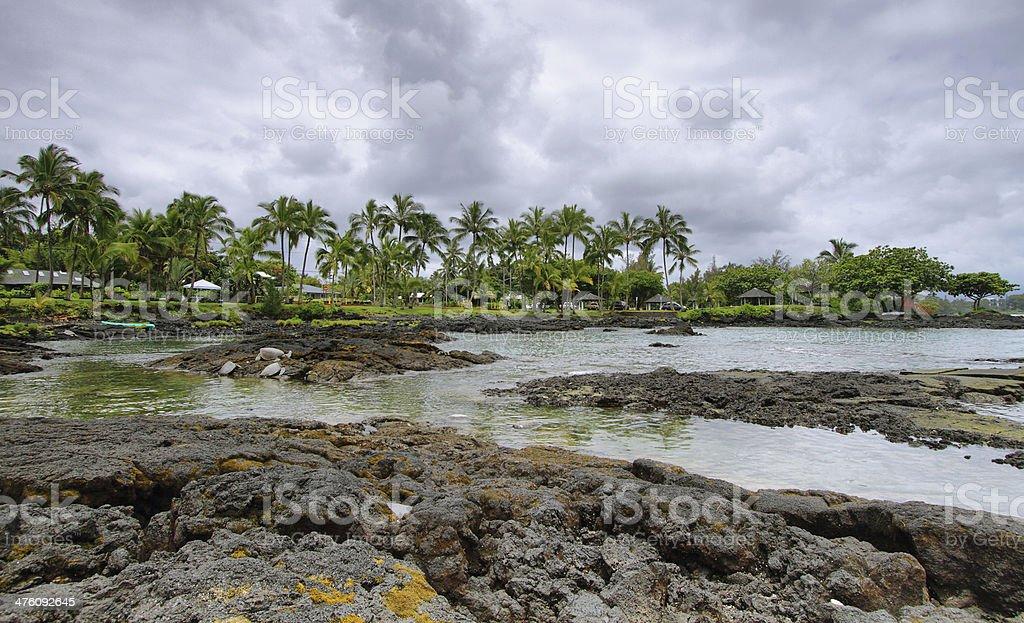 Landscape with turtles in Richardon ocean park stock photo