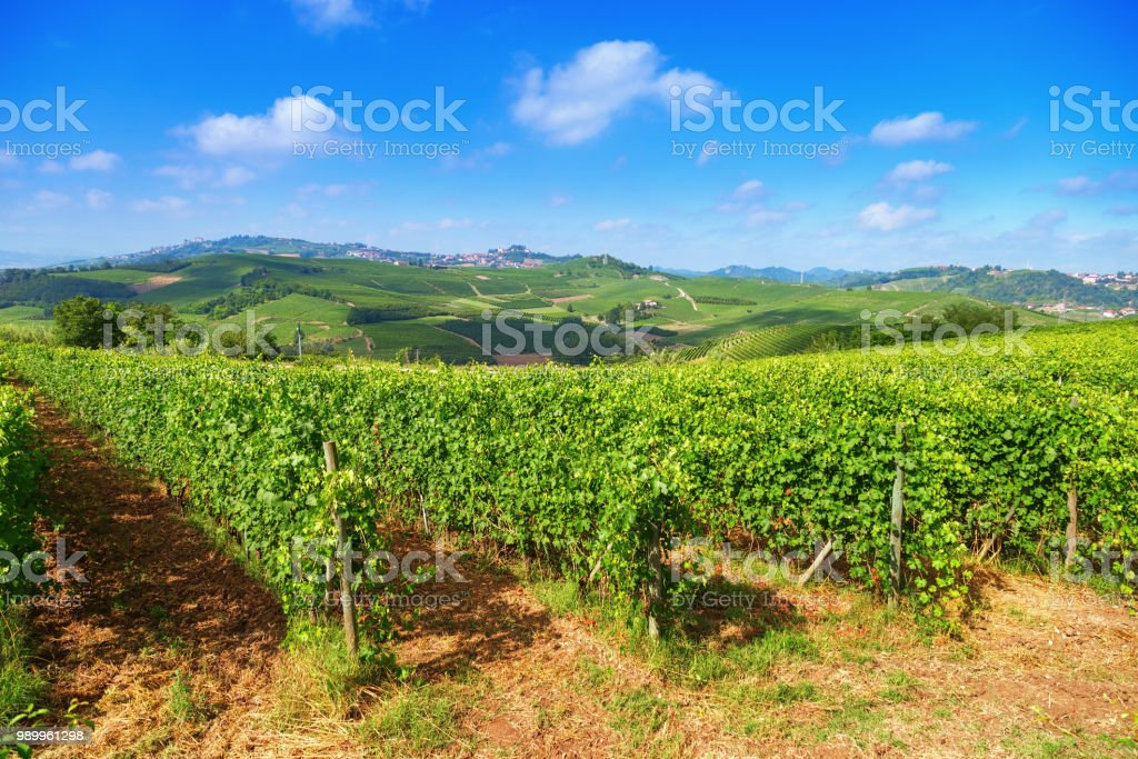 Landscape with vineyards at summer day. - foto stock