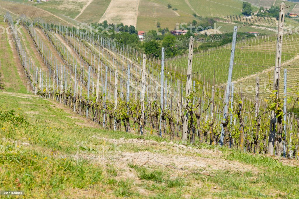 Landscape with vineyards from Langhe,Italian agriculture stock photo