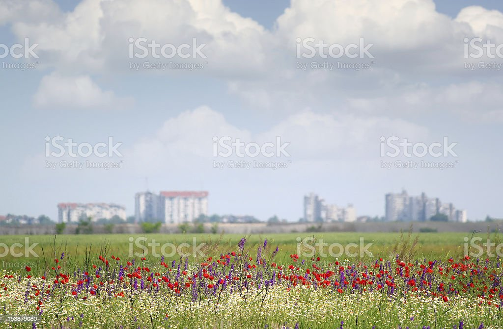 landscape with wild flowers and city in background stock photo