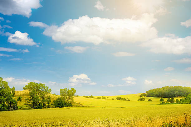 landscape with yellow field and blue sky, nature background stock photo