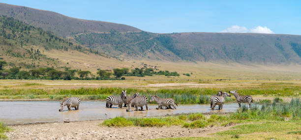Landscape with zebras, Africa stock photo