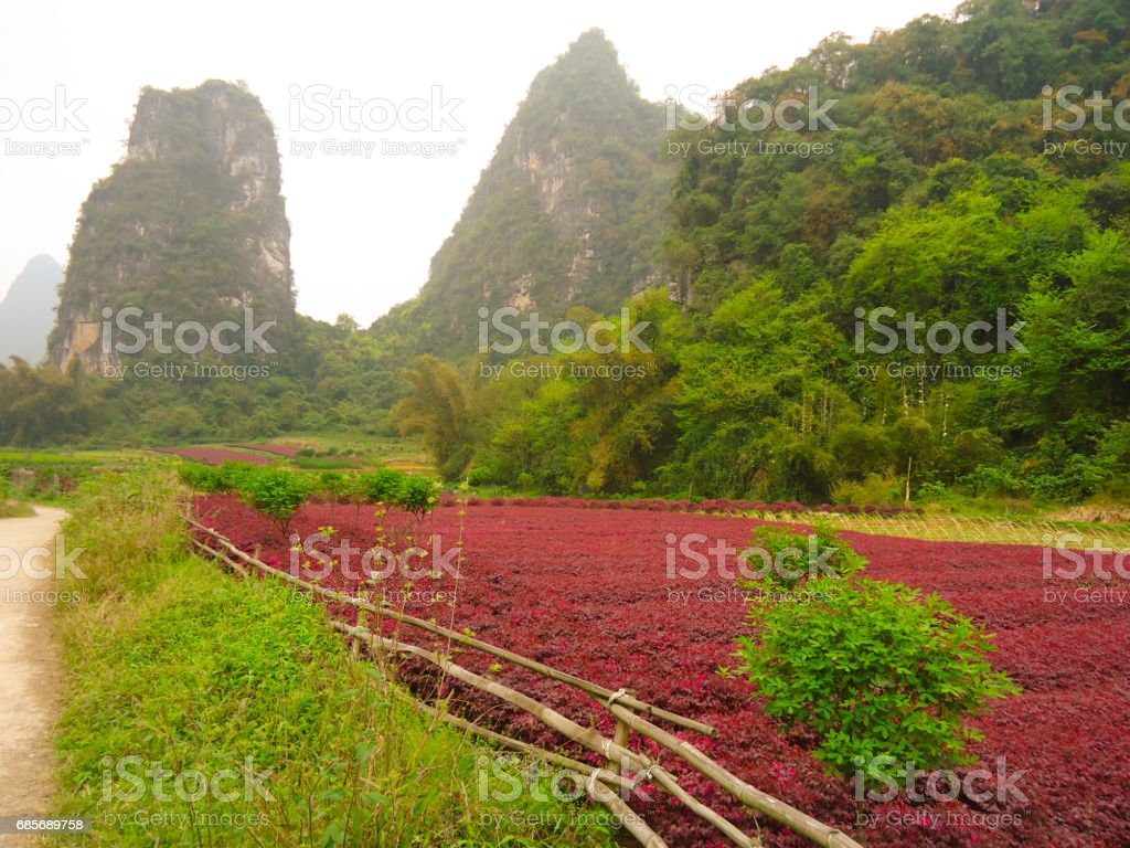 Landscape, Yangshuo, China ロイヤリティフリーストックフォト