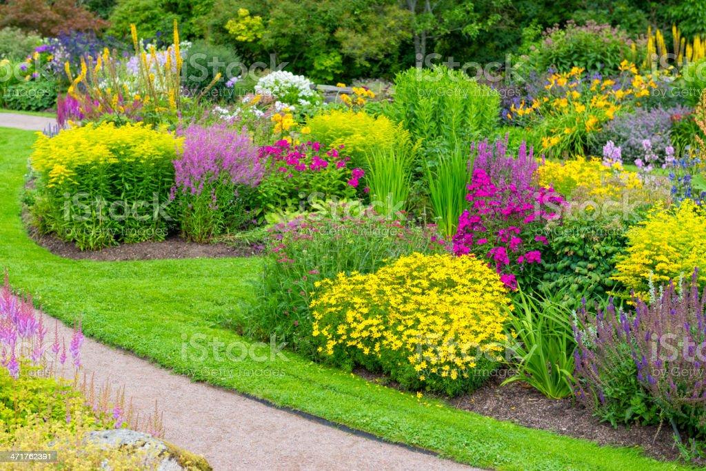 Schöne Blumen Im Garten Stock Fotografie Und Mehr Bilder Von