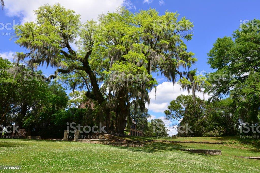 Landscaped gardens in South Carolina, America stock photo