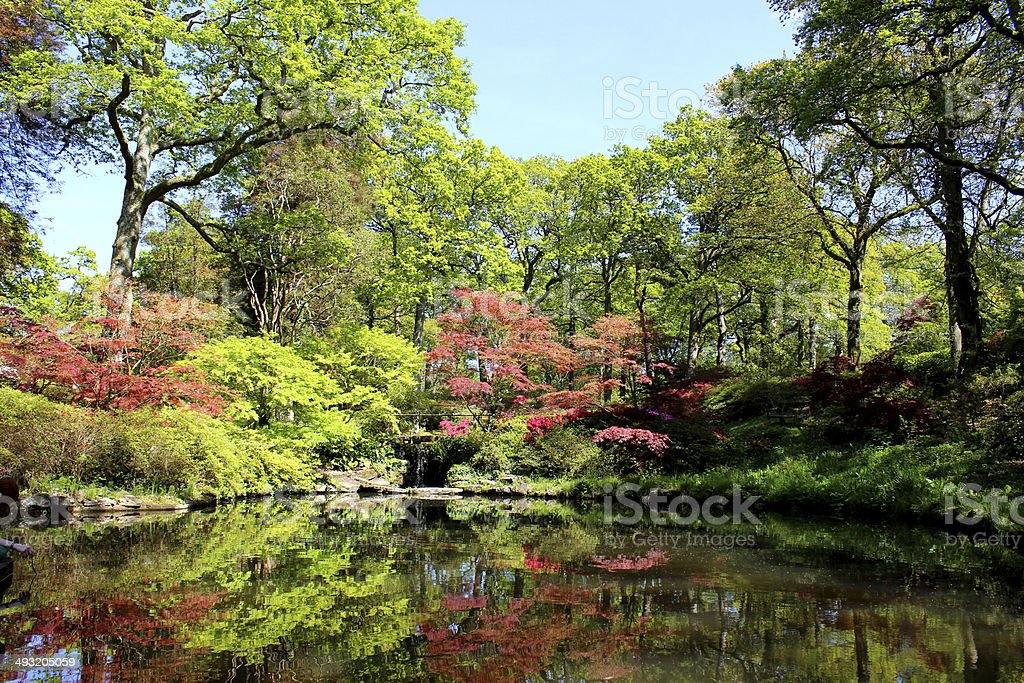 Landscaped Japanese garden with koi carp pond, maples and azaleas stock photo