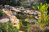 Koi carp fish pond with stone, rockery waterfall in a garden or back yard as a water feature for pet fish