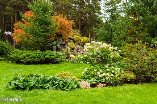 istock landscaped lawn of plants and artificial rocks 1174647613