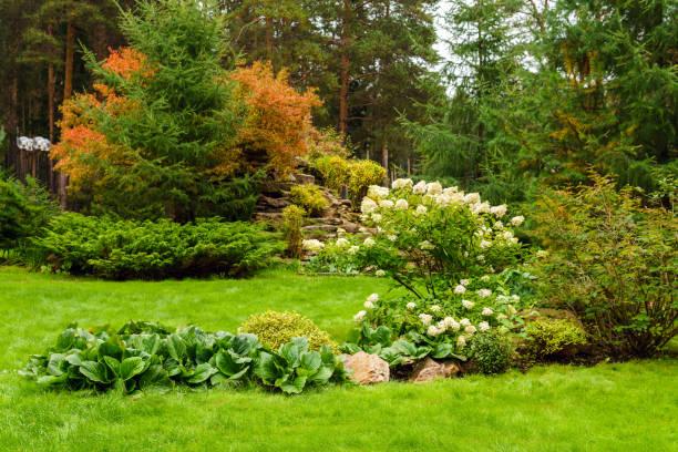 식물과 인공 바위의 조경 잔디 - 관상용 식물 뉴스 사진 이미지