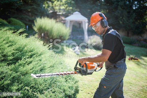 Side view of professional landscaper trimming hedge with power saw.