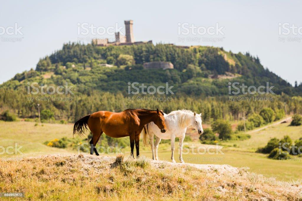 Landscapes of Tuscany, Italy stock photo