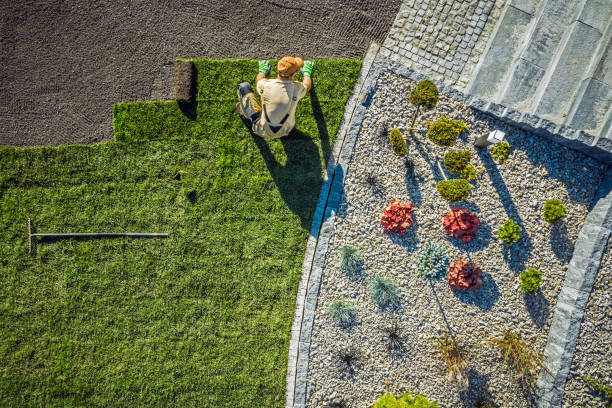 Landscaping Contractor Installing New Turf In Backyard. stock photo