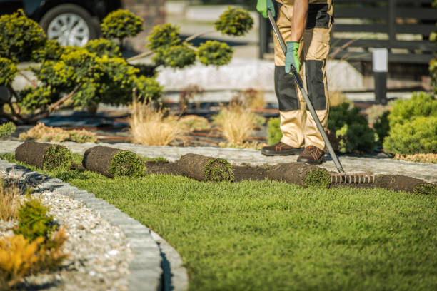 Landscaping Contractor Installing Sod For New Lawn. stock photo
