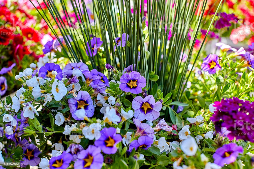 Landscaping Floral Arrangment with Assorted Flowers stock photo
