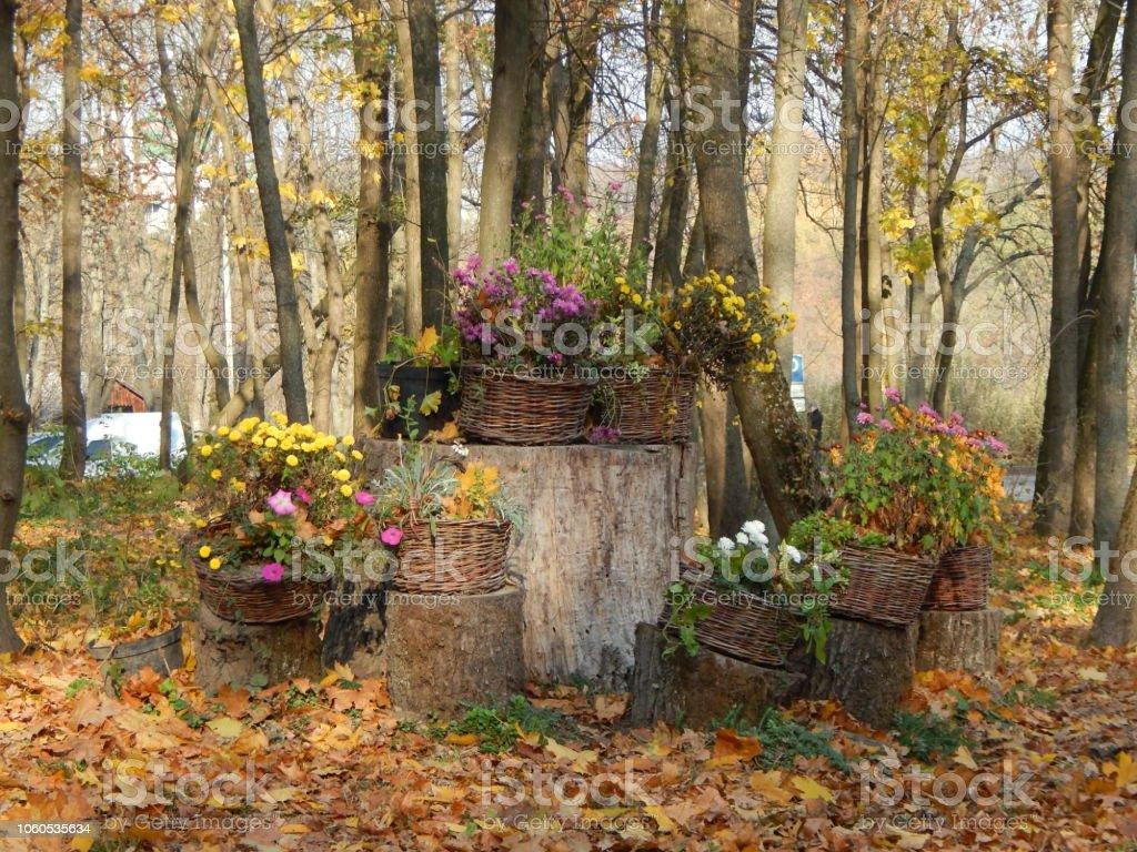Landscaping garden in park art stock photo