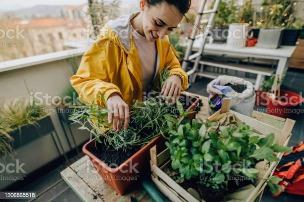 Landschaftsgestaltung Meines Balkongartens Stockfoto und mehr Bilder von Aktiver Lebensstil