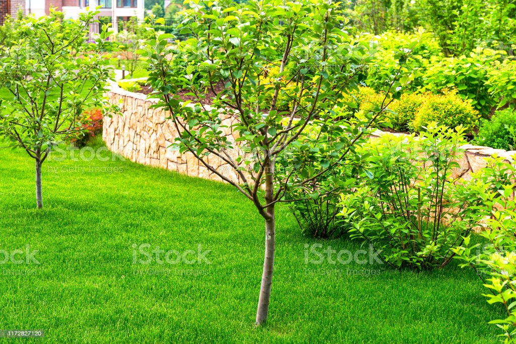 Landscaping Panorama Of Home Garden Stock Photo Download Image Now Istock