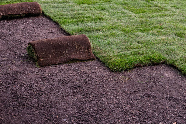 landscaping work -roll of sod stock photo