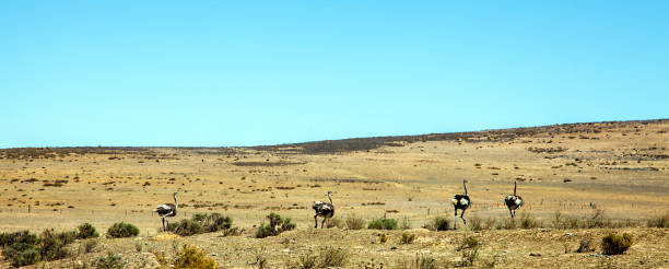 Landschaft bei Darling Südafrika stock photo