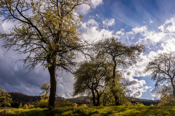 Landschaft des Teutoburger Familiengrüfte Beim Wandern – Foto