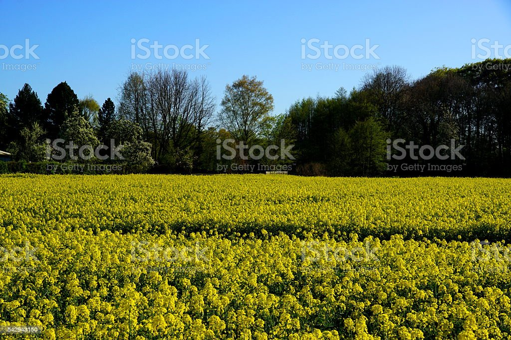 Landschaft im Sommer stock photo