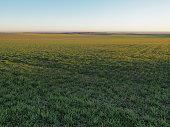 Landwirtschaft Sonne Feld