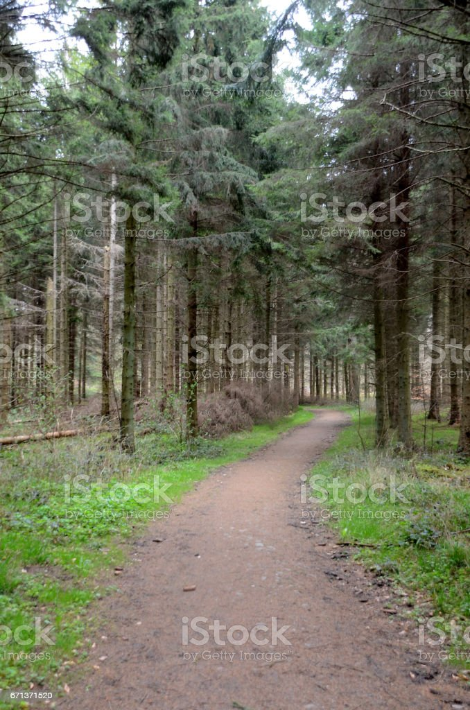 Lane in forest stock photo