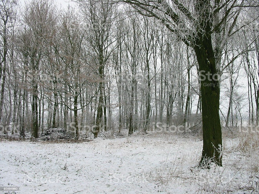 lane in the forest royalty-free stock photo
