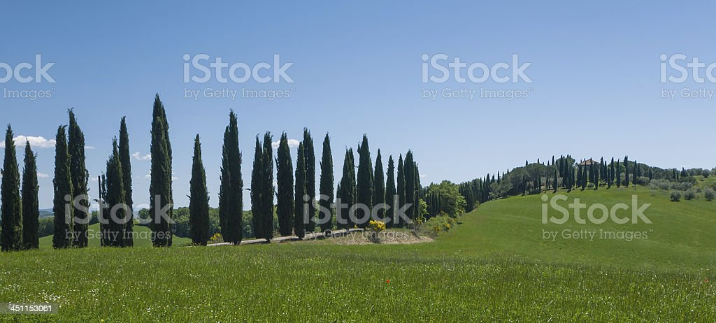 Lane lined with cypress trees in Tuscany royalty-free stock photo