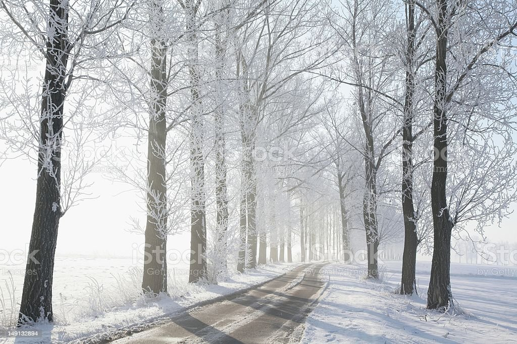 Lane on a foggy winter morning royalty-free stock photo