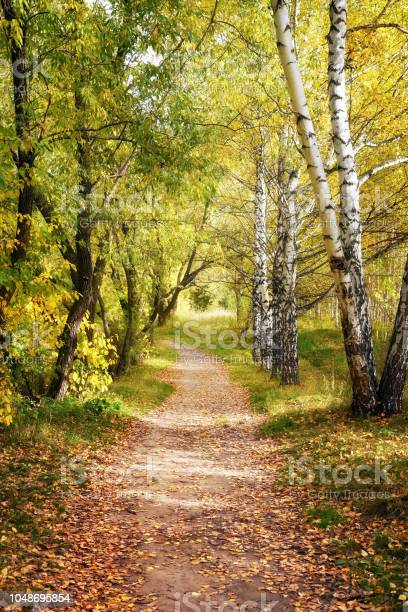 Photo of Lane Path Through Beautiful Fall Forest as Autumn Landscape