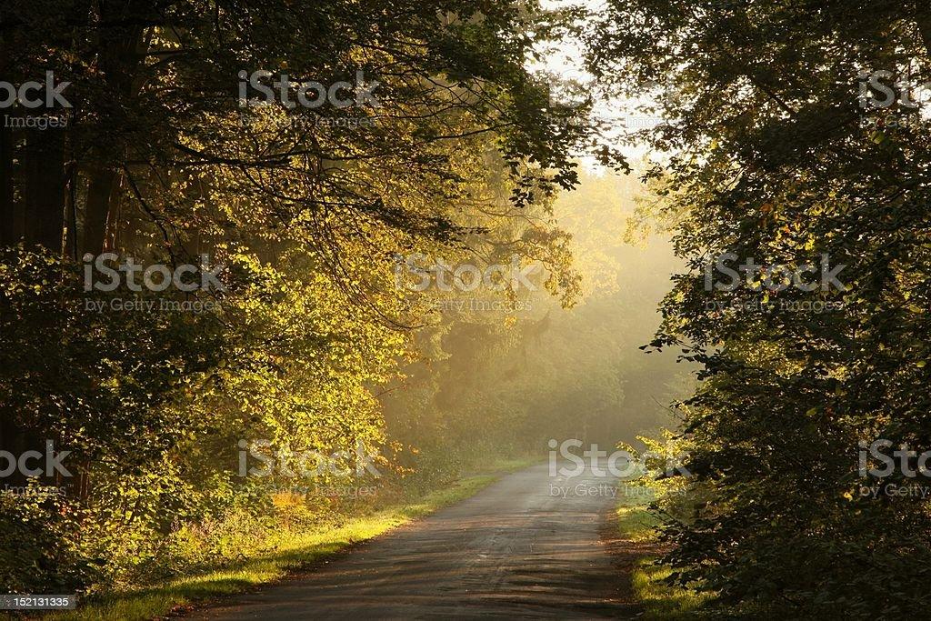 Lane through autumnal forest at dawn royalty-free stock photo