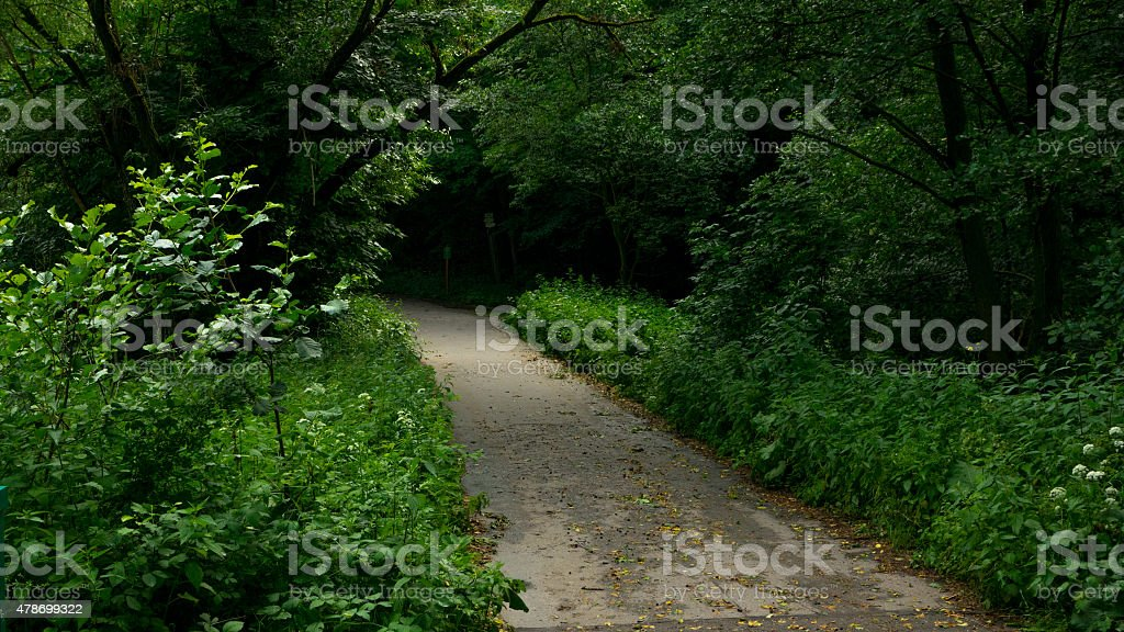 Lane to the woods stock photo