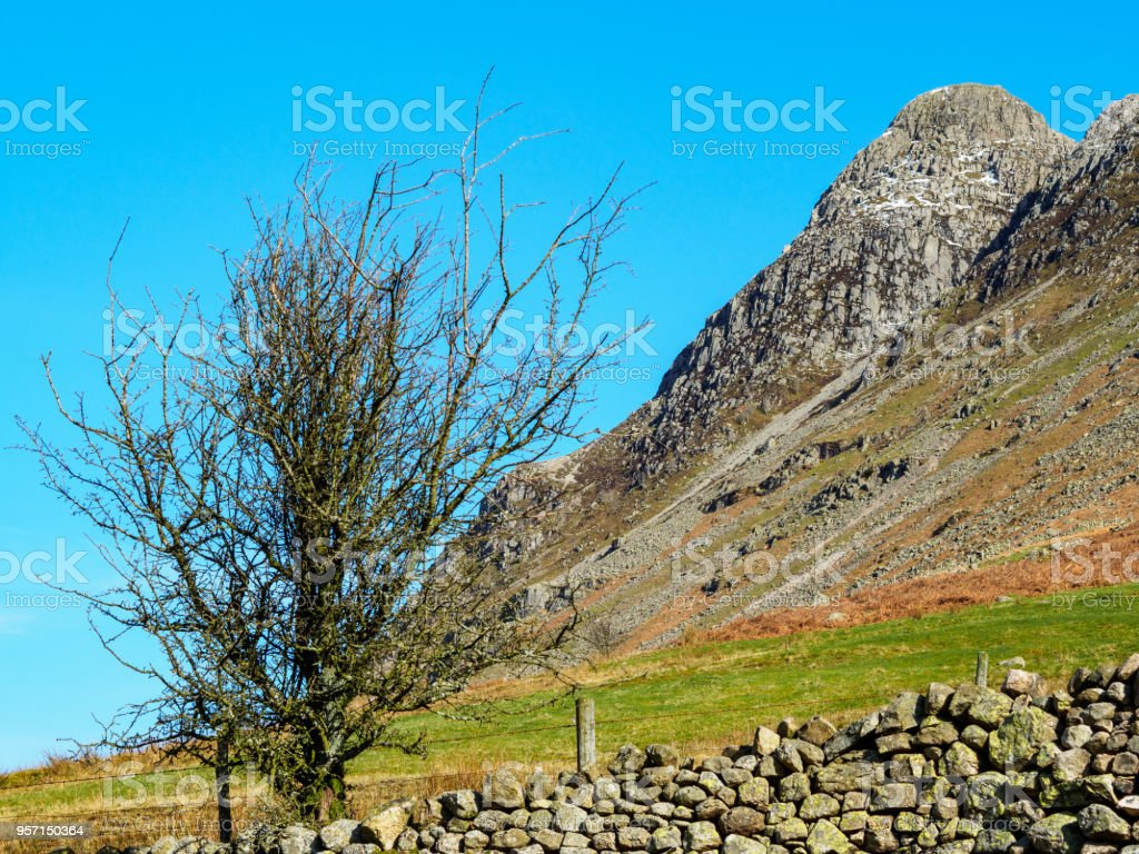 Langdale Pike with stone wall and bush stock photo