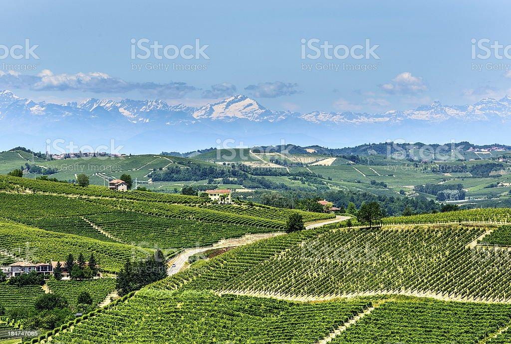 Langhe, vineyards stock photo