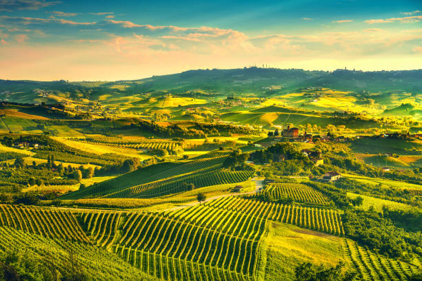 langhe vineyards sunset panorama, grinzane covour, piedmont, italy europe. - unesco foto e immagini stock