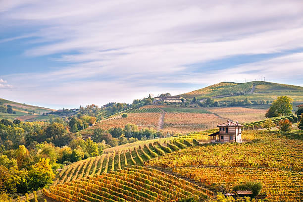 langhe wineyards hills, cuneo, piedmont  italy. barolo, barbaresco dolcetto wines - italien stock-fotos und bilder