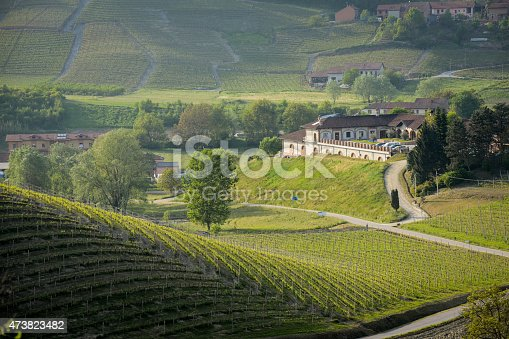 Roero-Langhe in Spring. Vinery among vineyards