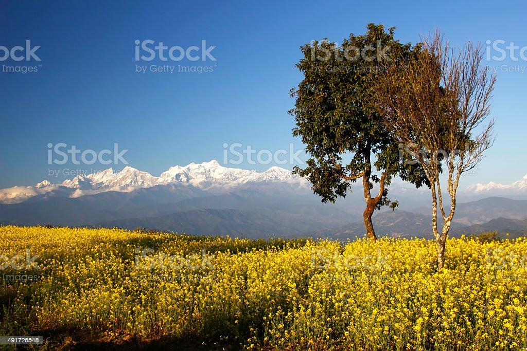 Langtang Himalaya stock photo